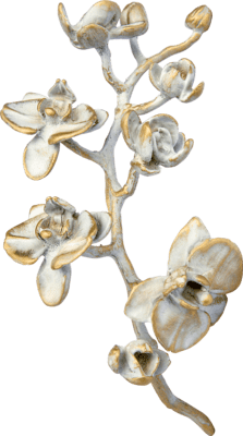 Orchidee groot brons bianco